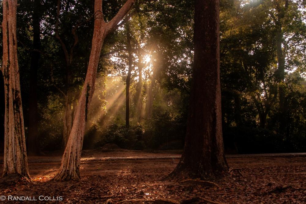 Morning Light at Bayon -2