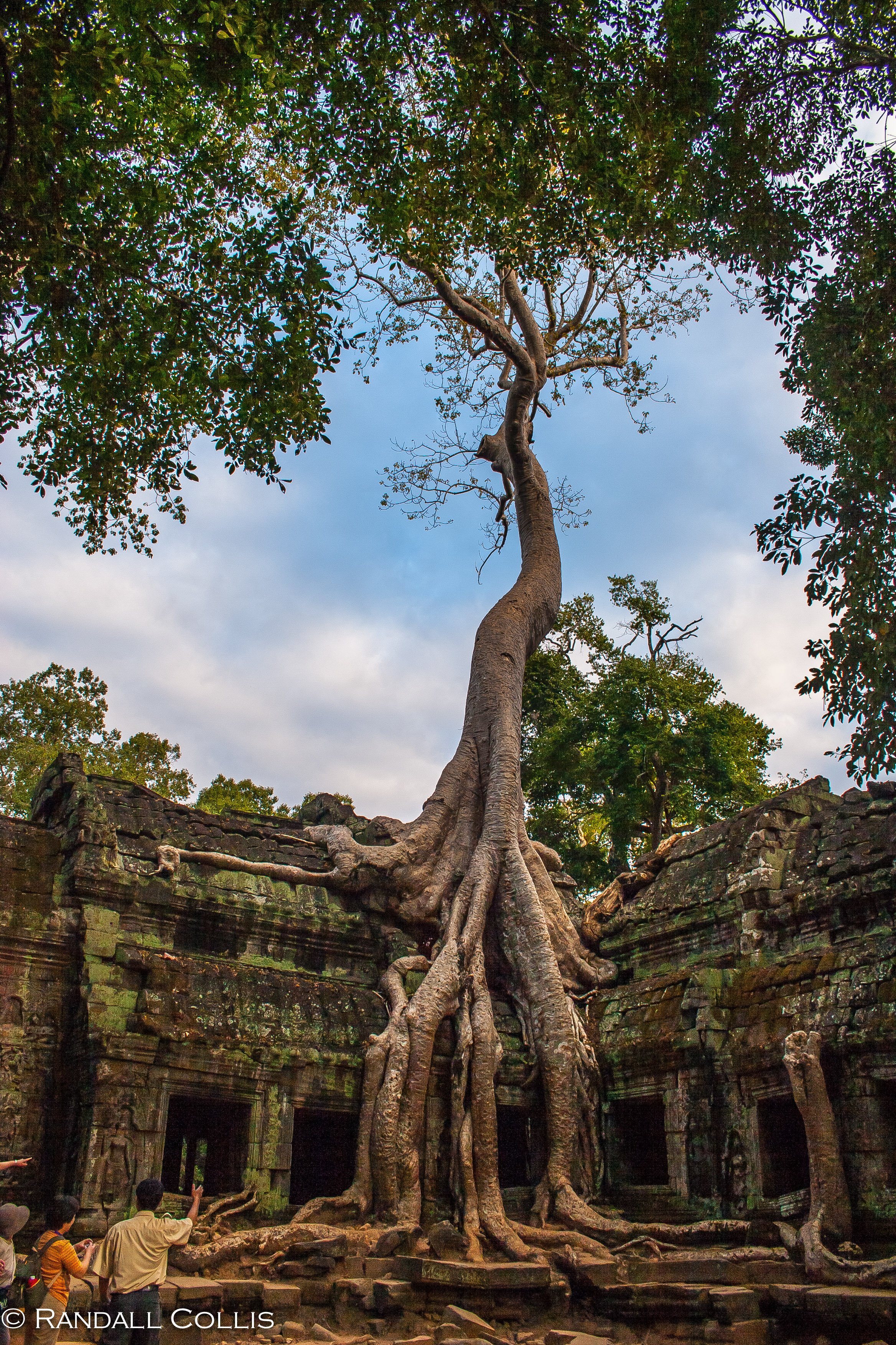 Ta Prohm Godess Tree-15