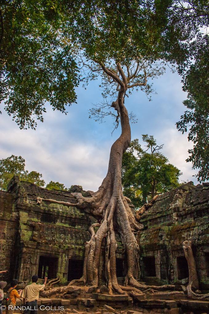 Ta Prohm Godess Tree-15