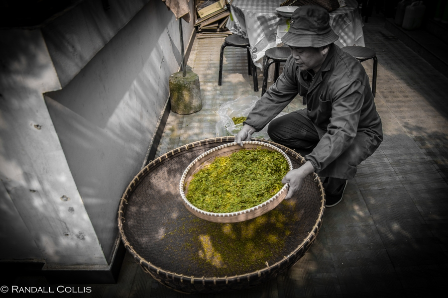 梅家坞龙井茶-12