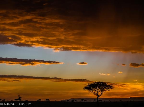 Acacia Tree of Amboseli