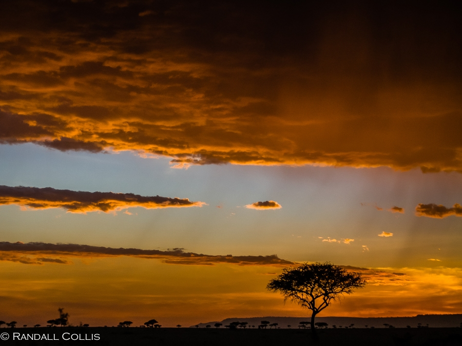 Acacia Tree of Amboseli