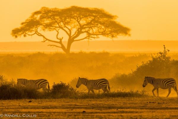 Kenyan Sunrise in Golden Glow