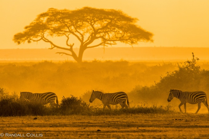 Kenyan Sunrise in Golden Glow