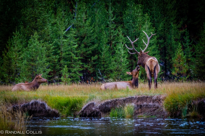 YellowstoneNP-134