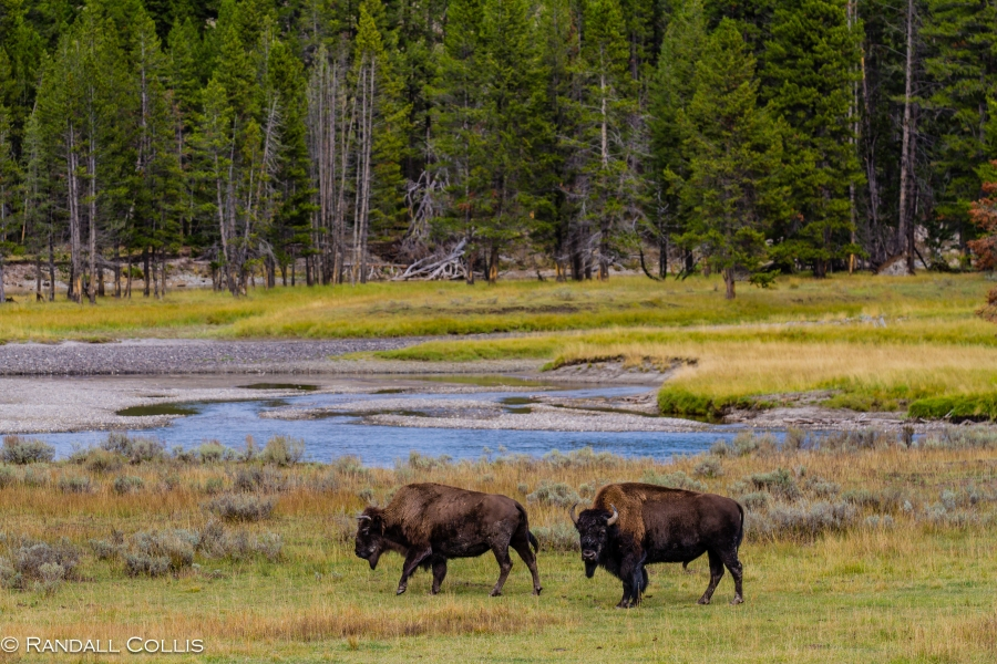 YellowstoneNP-2