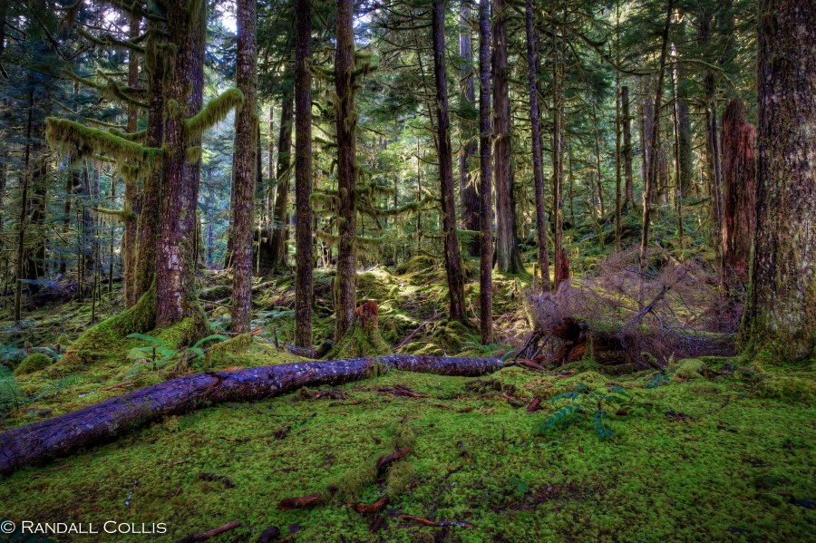 Staircase Trail Olympic National Forest -11