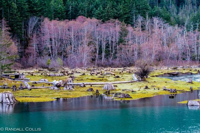 Skokomish Wilderness Olympic National Forest-12