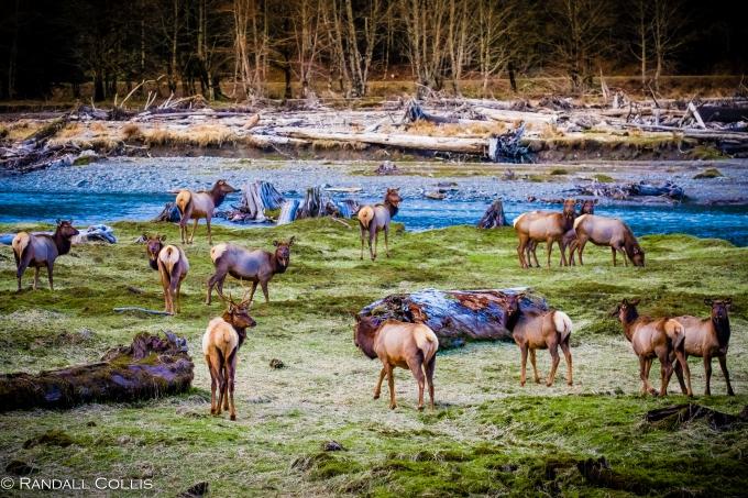 Skokomish Wilderness Olympic National Forest-15