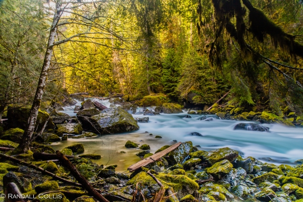 North Fork Skokomish River Olympic National Forest-6