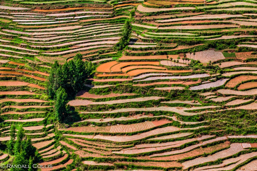 Yunnan Red Soil Positive Envy-3