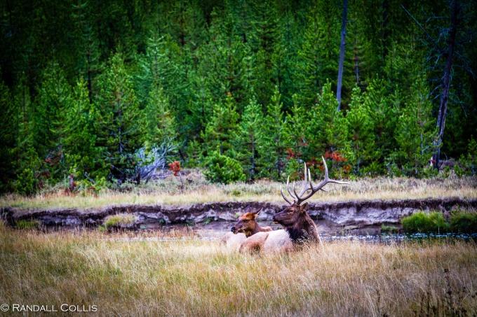 Pacific Northwest Nature-12