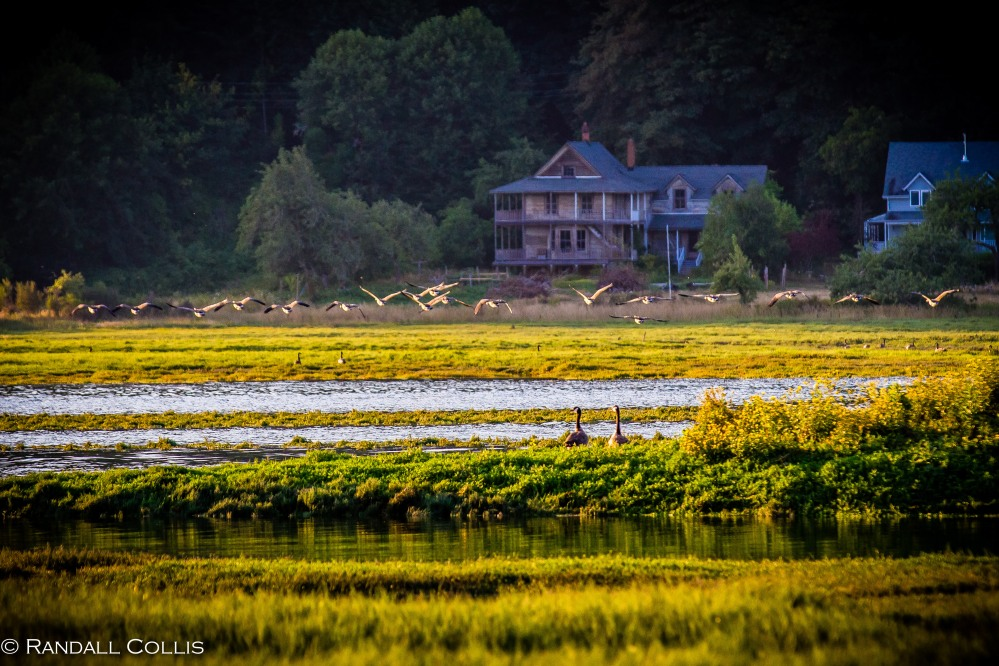 Pacific Northwest Nature-3