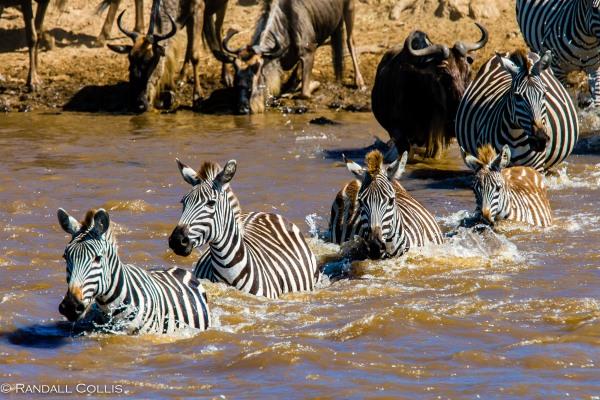Kenya Maasai Mara Africa-16