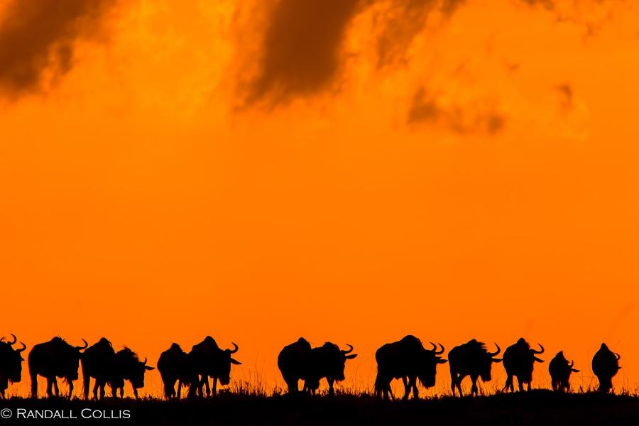 Kenya Maasai Mara Africa-5