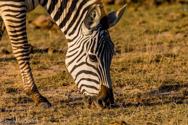 Kenya Maasai Mara Africa-6