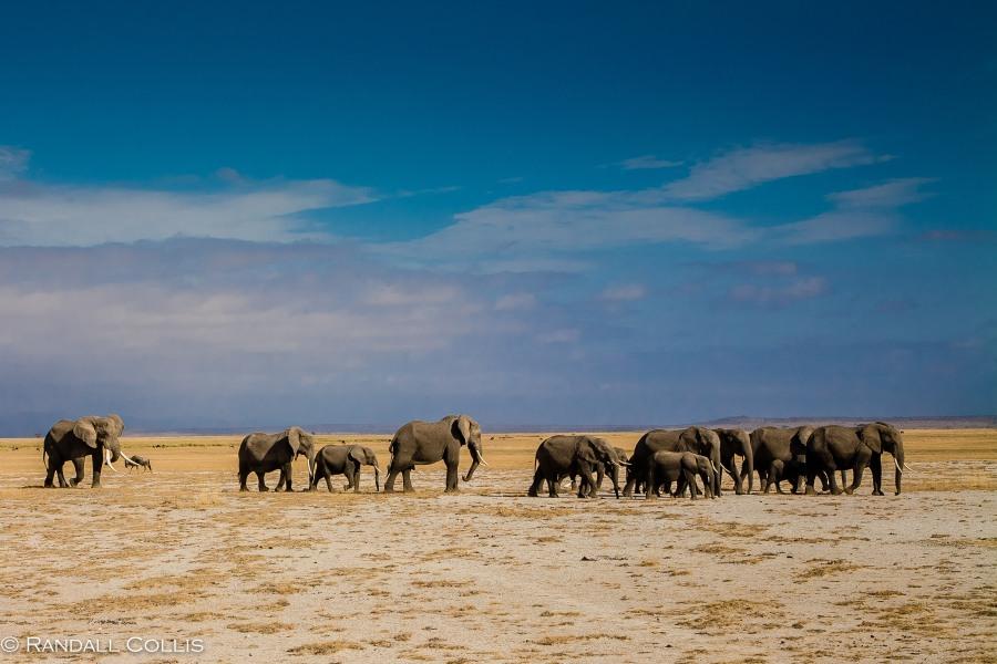 Kenya Maasai Mara Africa-7