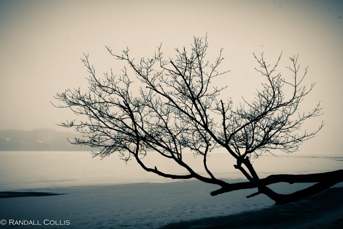 Lonely Winter Tree along Frozen Lake
