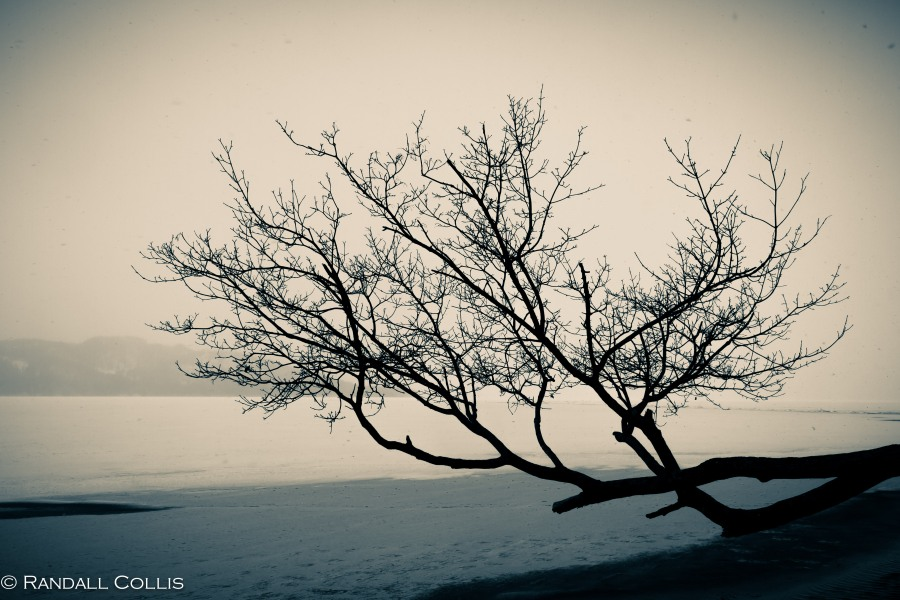 Lonely Winter Tree along Frozen Lake