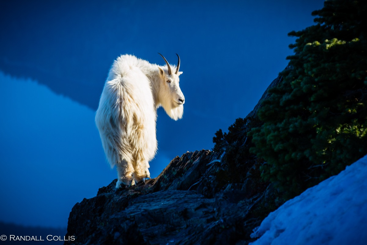 Global Sojourns Photography: Ellinor, The Year Of The Goat, And Quantum Entanglement