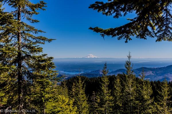 Mt. Ellinor and Skokomish Mountain Goats-12