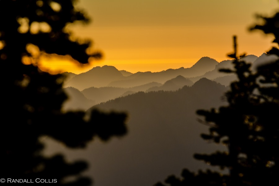 Mt. Ellinor and Skokomish Mountain Goats-2