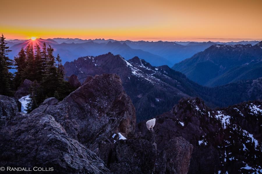 Mt. Ellinor and Skokomish Mountain Goats-3