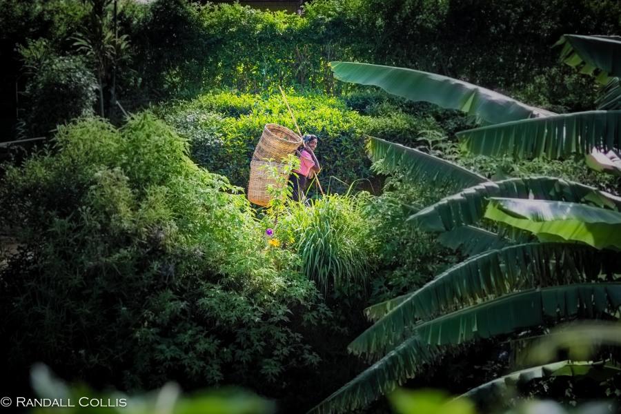 Nuwara Eliya - Sri Lankan Tea Plantations-1