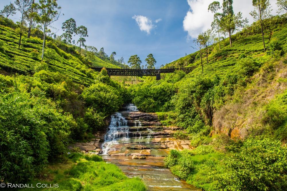 Nuwara Eliya - Sri Lankan Tea Plantations-2
