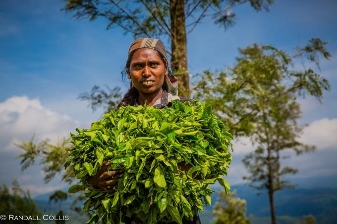 Nuwara Eliya - Sri Lankan Tea Plantations-3
