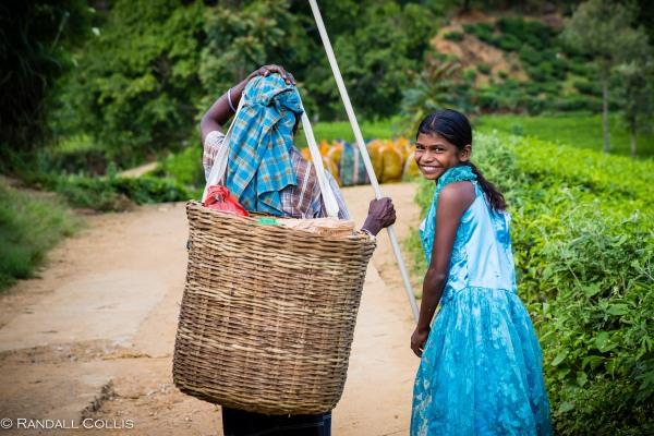 Nuwara Eliya - Sri Lankan Tea Plantations-9