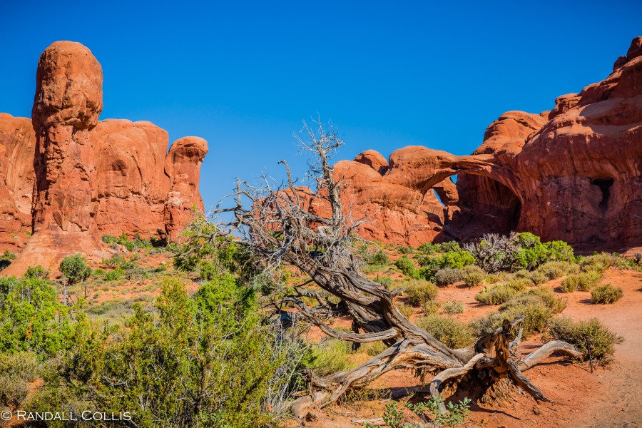 Utah - Arches and Canyonlands-6