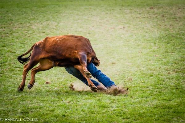 Pendleton Round-Up Let'er Buck - Life of a Cowboy-5
