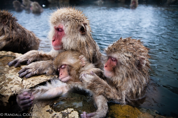 Japanese Macaque Snow Monkey - Perception of Time-7