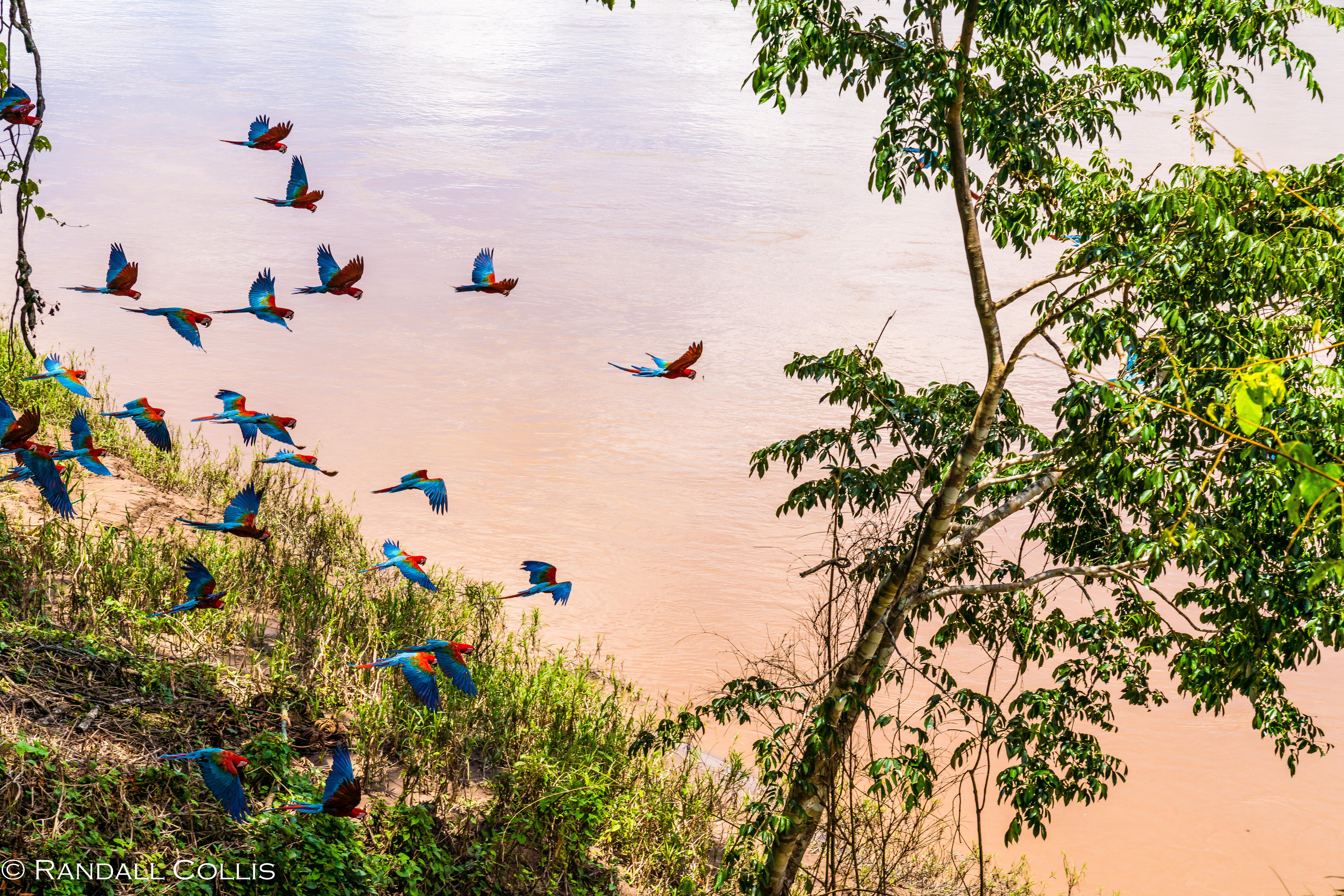 Perú - Rhythm of the Amazon -10