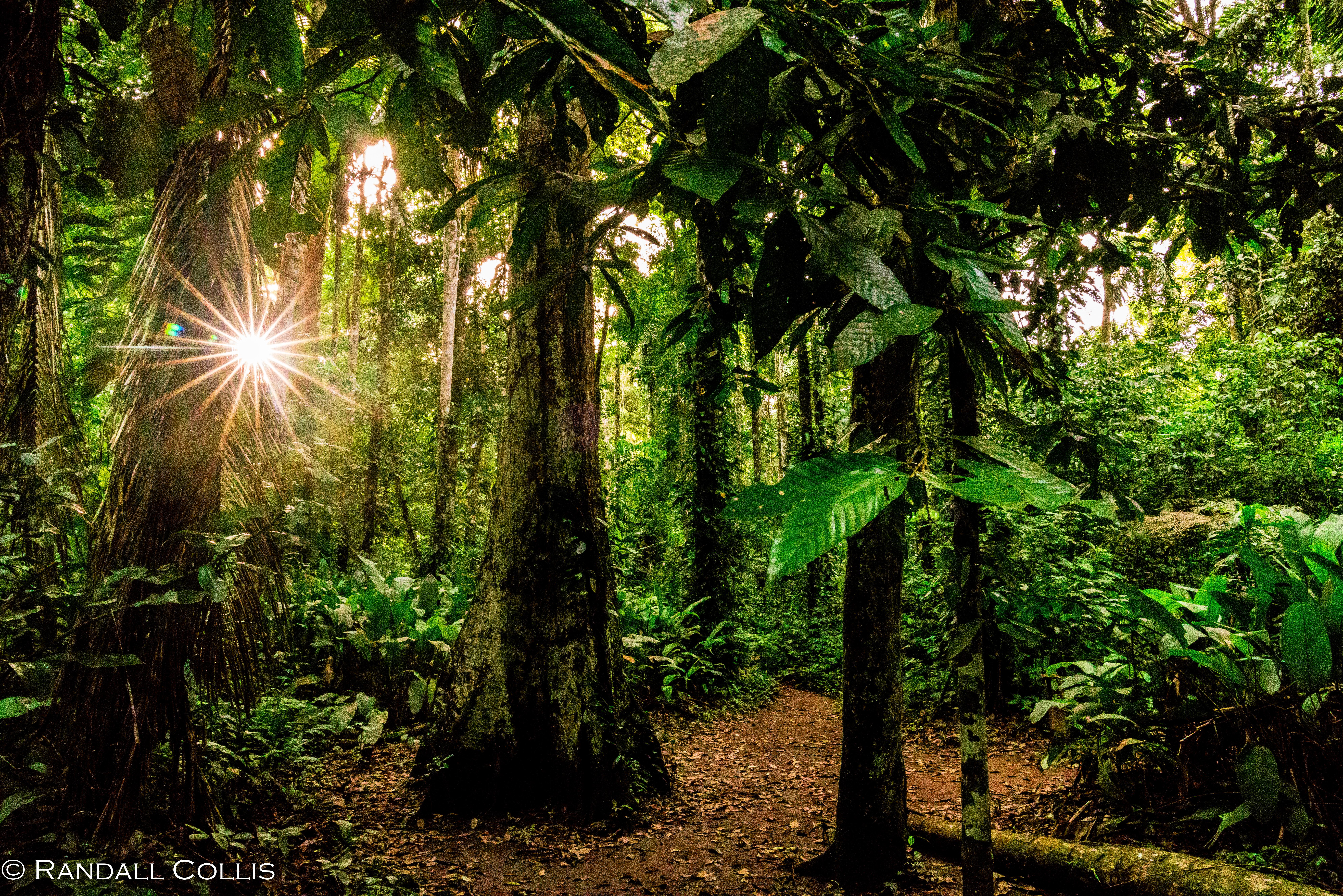 Perú - Rhythm of the Amazon -4
